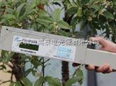 便携式叶面积仪用于湿地松叶林